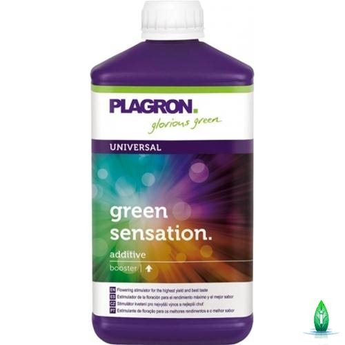 green senstation plagron